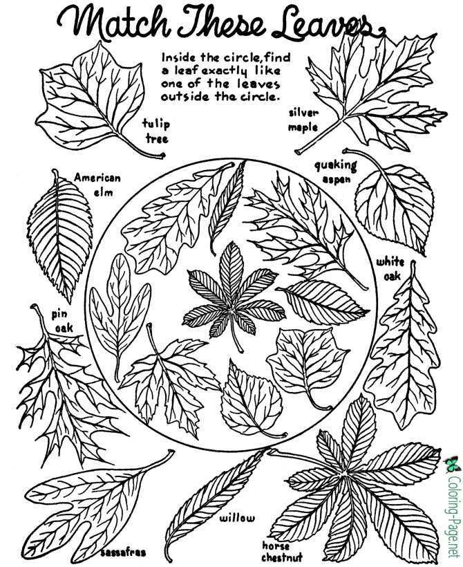 autumn coloring page for children
