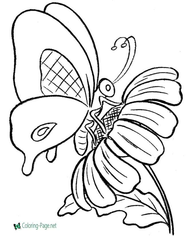 butterfly coloring page for children
