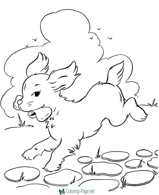 dogs coloring picture