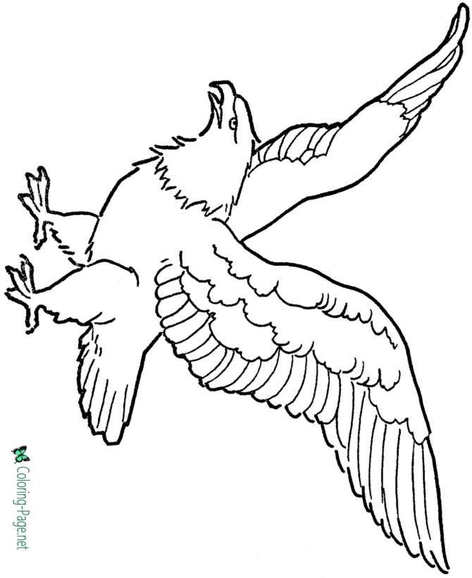 Printable Eagle Coloring Pages