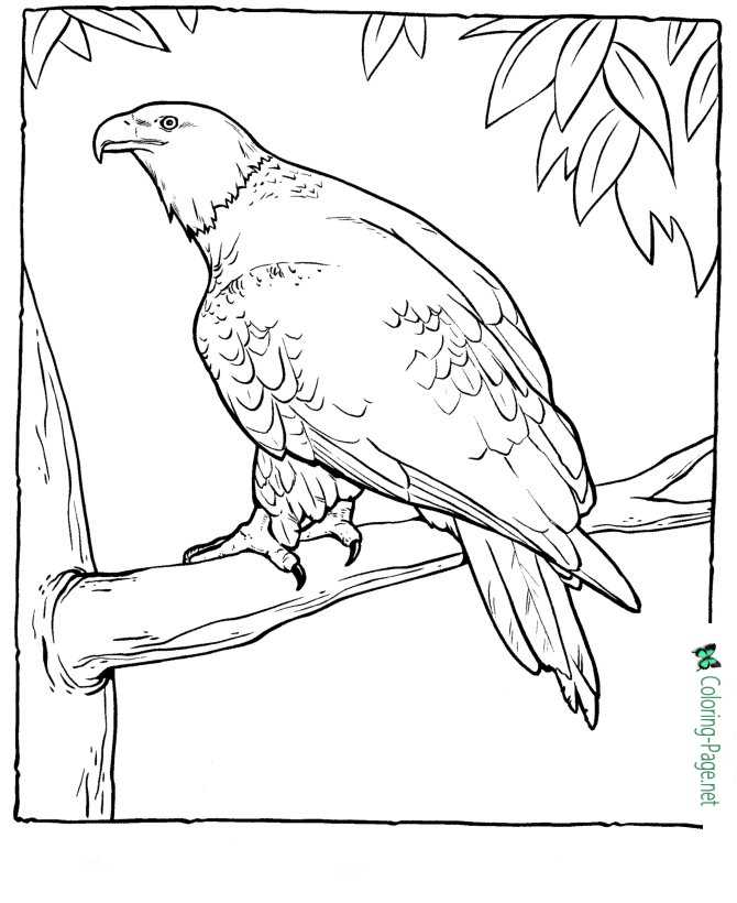 kids eagle coloring page