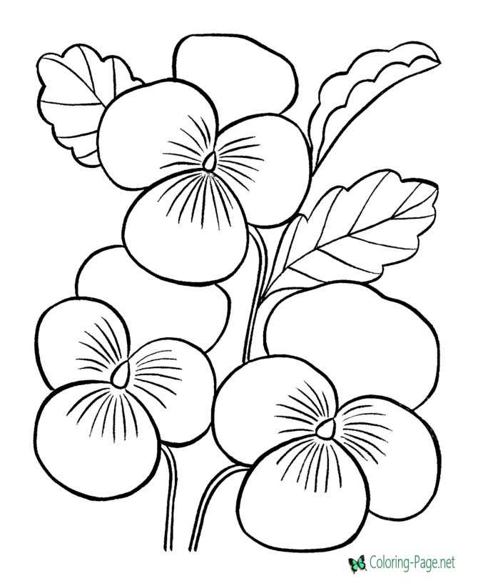 Flower Coloring Pages Flowers