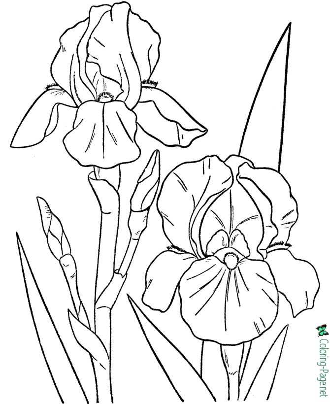 kids flower coloring page