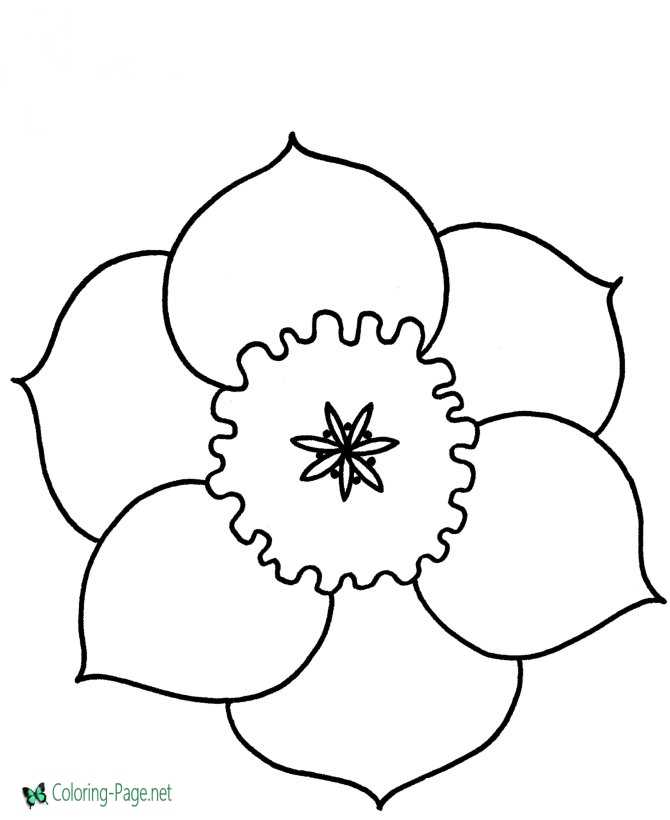 graphic about Printable Flowers to Color titled Flower Coloring Webpages