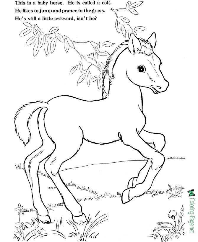 jumping colt coloring pages