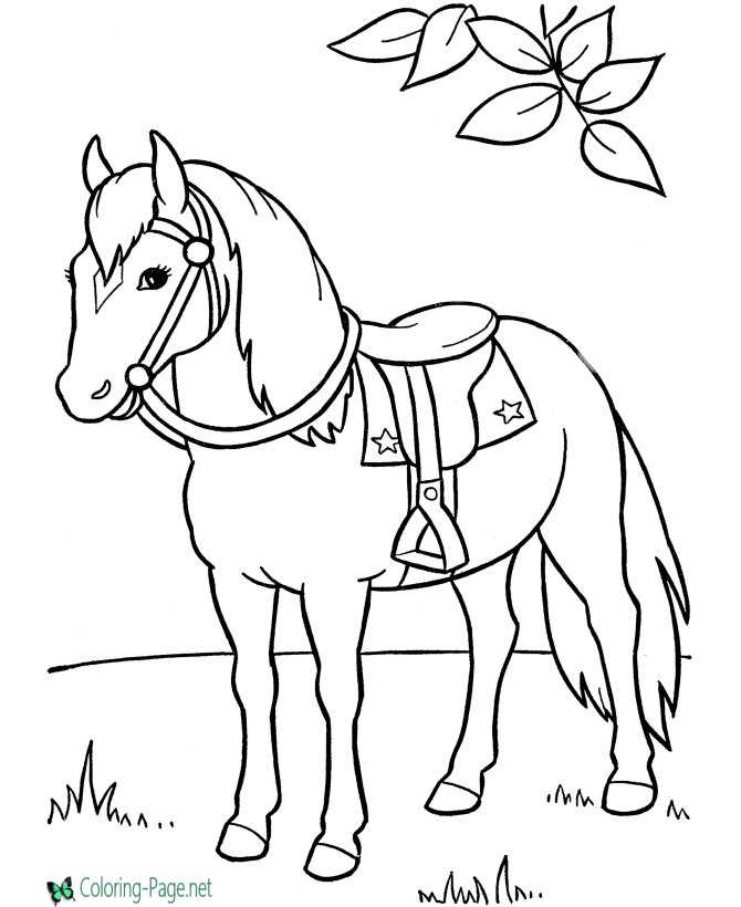 saddle horse coloring page