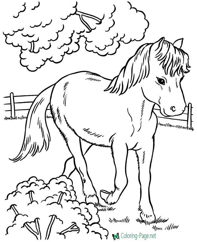 - Horse Coloring Pages