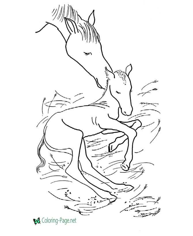 Horse Coloring Pages Newborn Colt