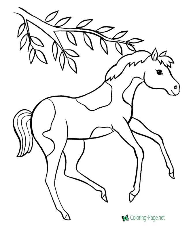 horse coloring pages - Horse Color Pages