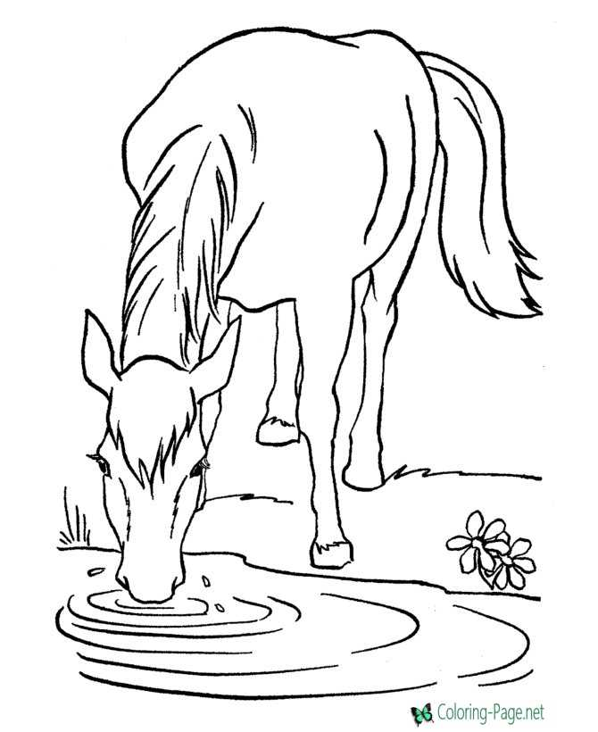 Horse Coloring Pages Wild Horses