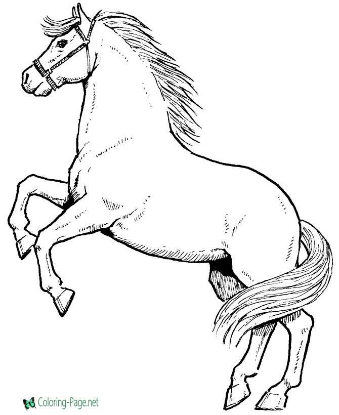 - Click A Picture Below For The Printable Horse Coloring Page