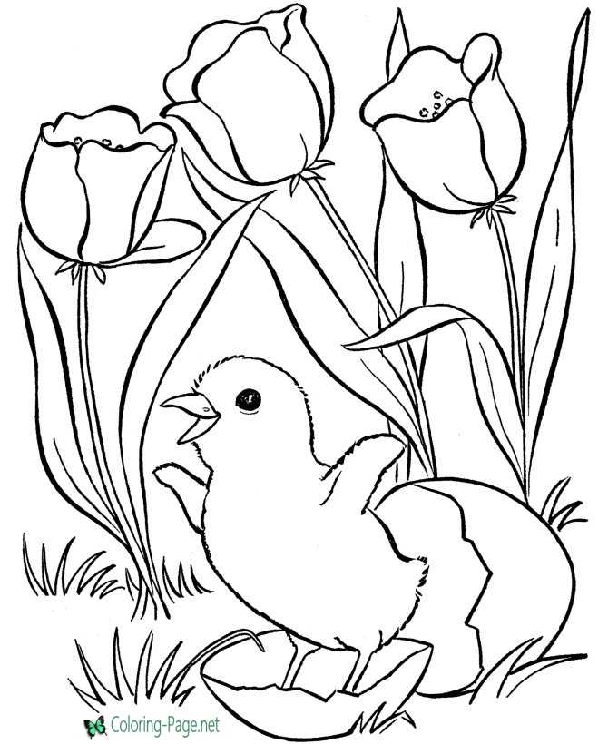 - Spring Coloring Pages