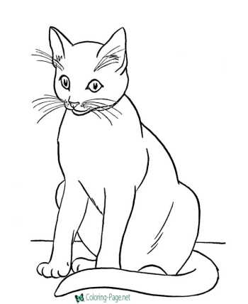 Animal coloring pages of Cats
