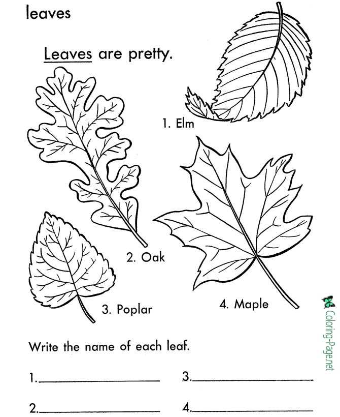 tree leaves coloring page