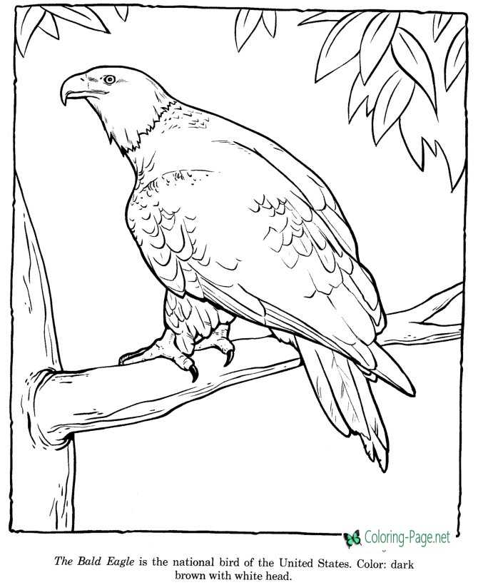 Bald Eagle Coloring Pages Zoo