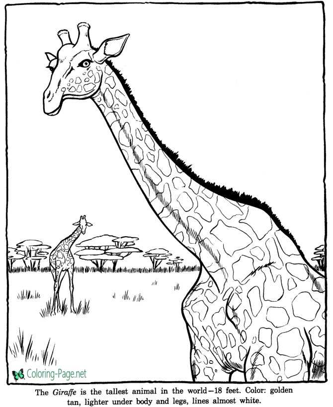 Zoo coloring pages for Animal coloring pages giraffe