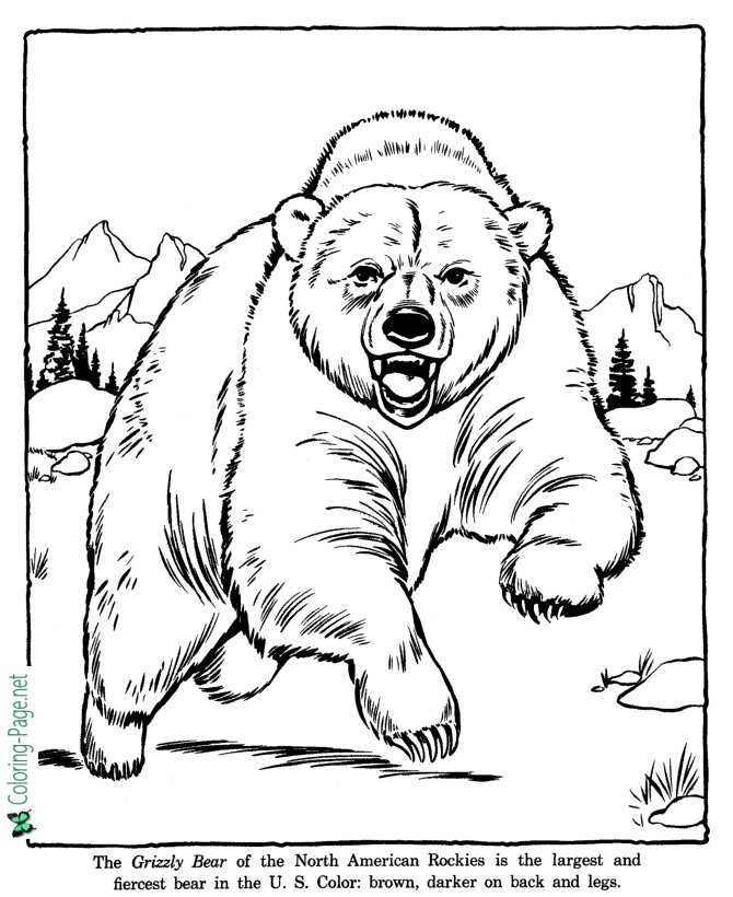 Grizzly Bear Coloring Pages Zoo