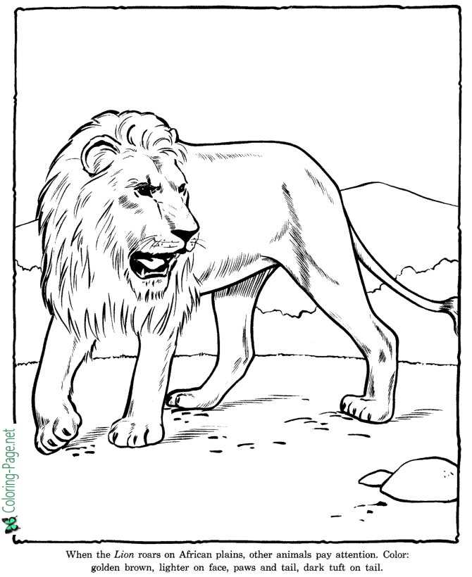 Lion Coloring Pages Zoo