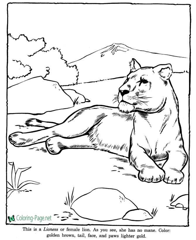 Lioness Coloring Pages Zoo