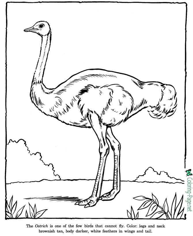 zoo coloring sheet
