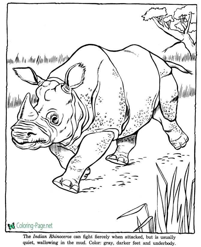 Rhinoceros Coloring Pages Zoo